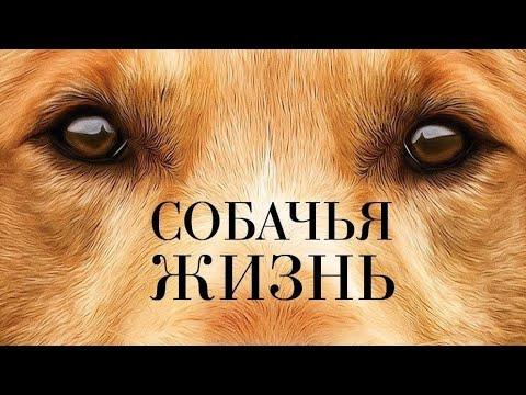 """Фильм """"Собачья жизнь"""" 1 часть"""