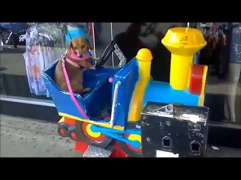 Komik Ve Cok Akilli Hayvanlar (VIDEOARA.MOBI) (3)st