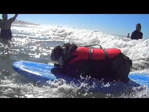 Surf City Surf Dog™ 2013 Highlights