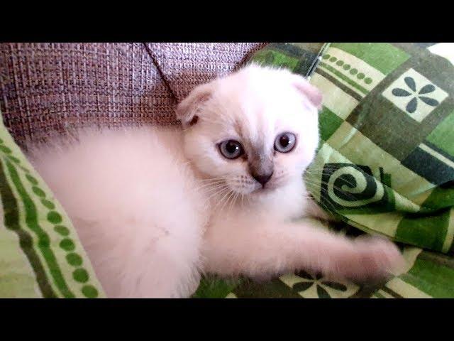 Faceti CUNOSTINTA cu ELSA, pisicuta NOASTRA !