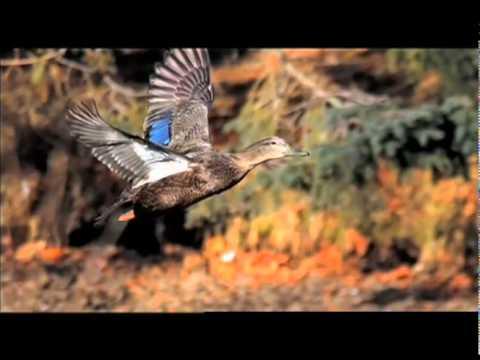 """DUTV 2010 - """"NJ Black Ducks"""""""