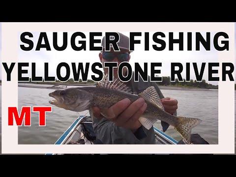 Sauger & Smallmouth Bass Fishing - Yellowstone River, Montana 2017