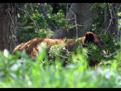 Bear country; backpacking Northern Yellowstone - Tepee Basin