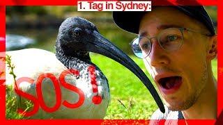 Vom Müllvogel attackiert! | Australien #3