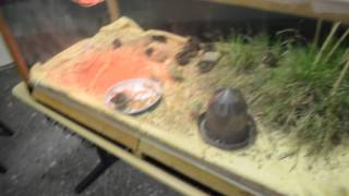Маленькие перепелята и яйца нанду )(В том же зоопарке, о котором предыдущее видео, где мы присматривали мини-кур для насиживания перепелиных..., 2016-04-30T08:06:34.000Z)