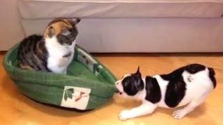 Ускользающая  Собака Кровать и Смешные кошки Сборник - [NEW HD]