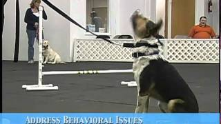 Family Dog Center Of Illinois - Crystal Lake, Il - Dog Obedience Training