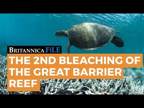 The Bleaching of the Great Barrier Reef