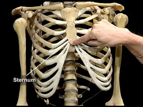 Human skeletal system youtube human skeletal system ccuart Image collections