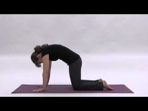yoga poses for a better back catcow from the abmp back