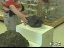 Odessa Meteorites Getting Thousands on Ebay