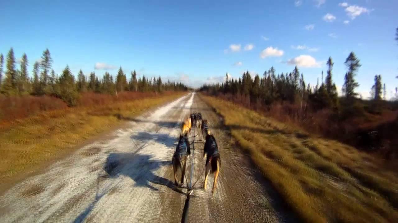 Entraînement d'automne chiens de traîneau / Sled dogs