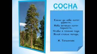 Деревья обучающая презентация для детей , природоведение