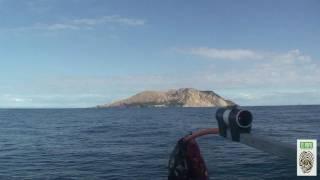 White Island (New Zealand) fish fauna (Part II - depth: 300m)
