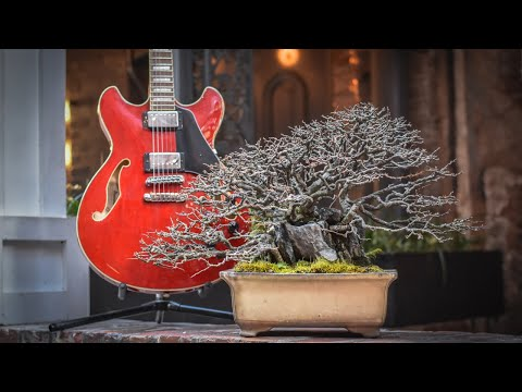 Bonsai Busking In Nashville Tennessee Youtube