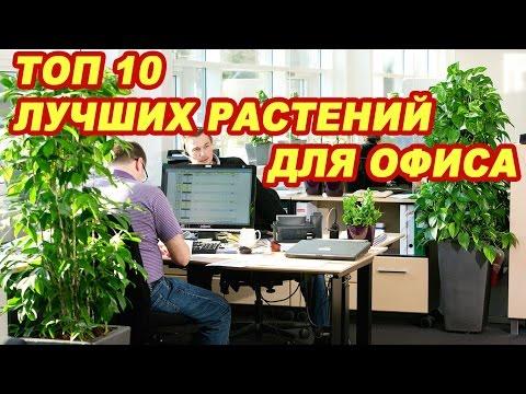 Топ 10 лучших растений для офиса