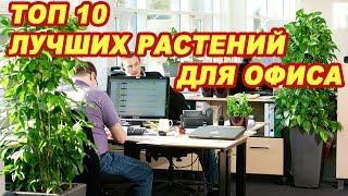 Топ 10 лучших растений для офиса(Смотри какие растения лучше всего очищают воздух в офисе 0:21 Сансевиерия, или по-простому — «тещин язык»..., 2016-01-09T16:16:04.000Z)