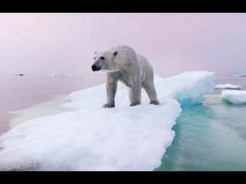 Polar Bears & Climate Change