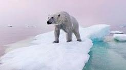 Polar Bears & Climate Change