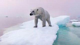 Polar Bears & Climate Change thumbnail