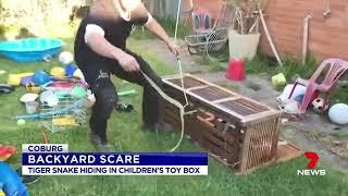 Preston dad's snake discovery inside children's toy box