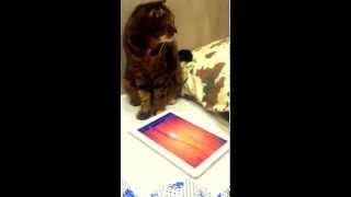 Кошка играет в свою игру на планшете