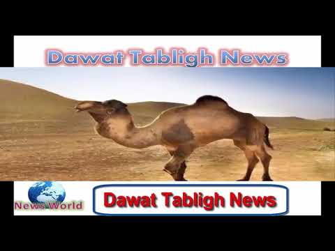 Dawat Tabligh News ||| Arab World become Dawat Tabligh