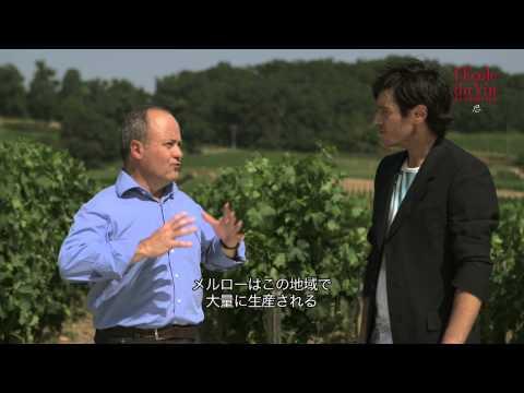 ボルドーワインに使用されるブドウの品種 - Cépages: the Bordeaux varietals