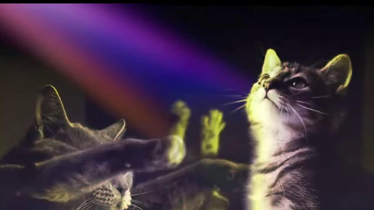 Песня дискотека у котов