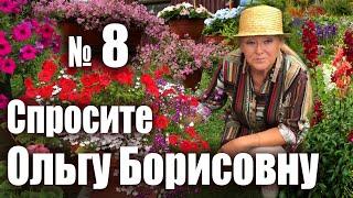 Какой объем горшка необходим цветущим растениям? Спросите Ольгу Борисовну №8.