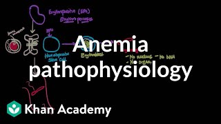 Anemia pathophysiology