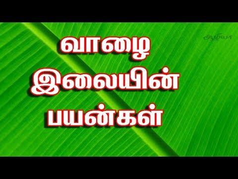 வாழை இலையின் பயன்கள் | Banana Leaf Tamil