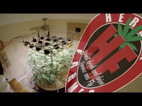 Aloe Vera & Organic Cannabis COB LED Cycle 2 No Till 12