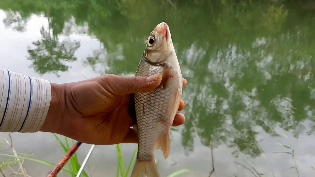 Fishing | Câu cá sông Quảng Nam – Đà Nẵng: Giật cá đã tay mà dong cá không sướng.