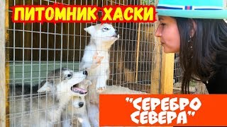 Питомник Хаски Серебро Севера. Деревня ездовых собак. Что посмотреть в Самарской области. 12+