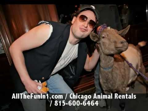 Call 815-600-6464 / Chicago Mobile, Traveling Petting Zoo, Chicagoland, Illinois, Animal Rentals