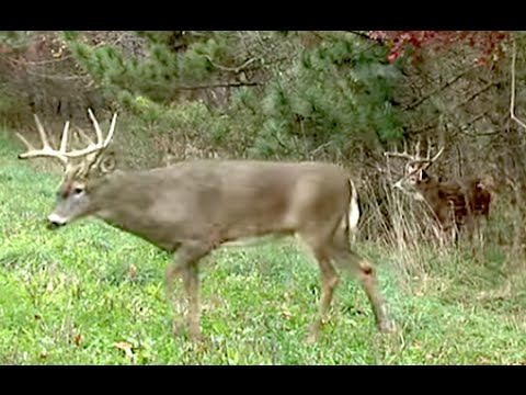 How to get the best results from your deer food plots