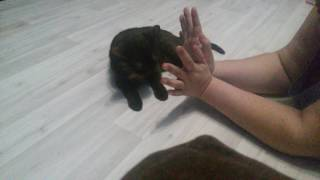 Коты наркоманы часть2