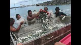 Guam USA; Catching Atulai(local fish)
