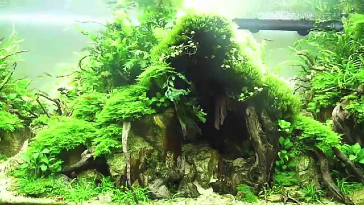 ... IAPLC 2014 ADA Takashi Amano - Technique Aquascaping - YouTube