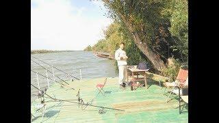 Дунай, Вилково. Перекормили кота рыбой. Рыбалка в сентябре в дельте Дуная