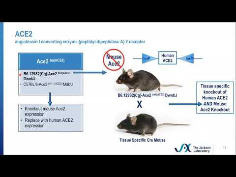Innovative and Novel Mouse Models for Studying Coronavirus Infection