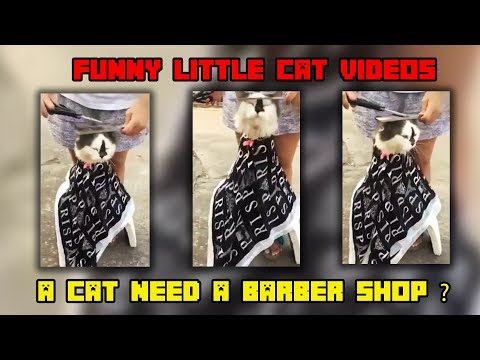 Funny Cat Video Compilation 2019 Try Not To Laugh Challenge 2019 Best videos funny cats #12