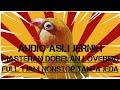 Masteran Dobelan Lovebird Ngekek Konslet Nada Minor Suara Jernih Tanpa Jeda Full 1 Jam Nonstop Ngekek(.mp3 .mp4) Mp3 - Mp4 Download