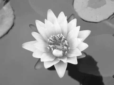Silver Lotusdisruptors Youtube