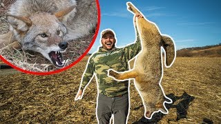 I Finally TRAPPED My FIRST COYOTE!!! (Lucky Catch)