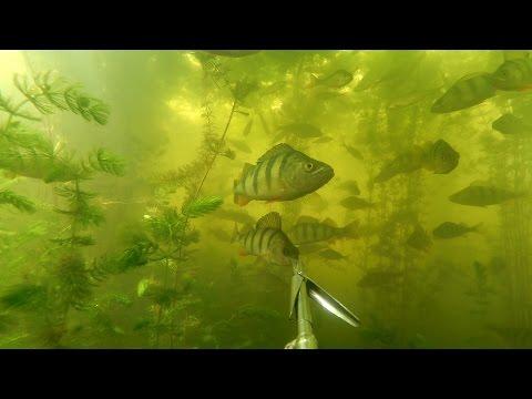 подводная охота на симферопольском водохранилище