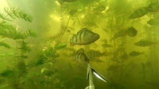 Подводная Охота на Краснооскольском Водохранилище.
