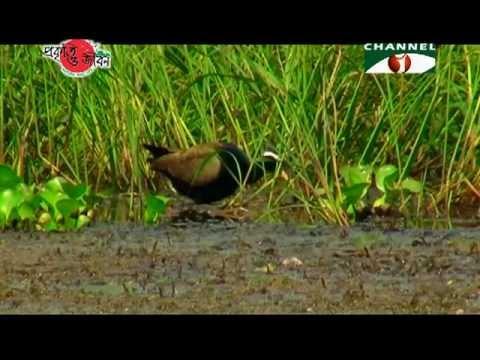 Nature and Life - Episode 84 (Migratory Birds of Bangladesh)