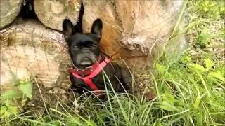 Taki tam spacer z psem po lesie ;)